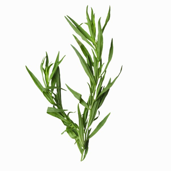 Tarragon spice is an herb.
