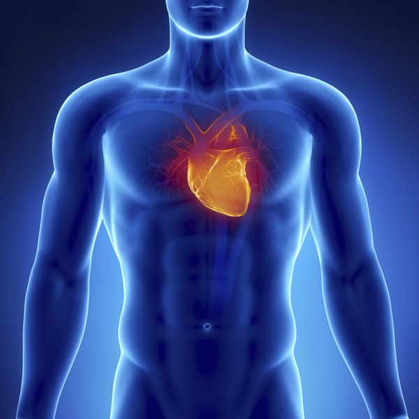 The apical pulse is felt near the heart's apex.