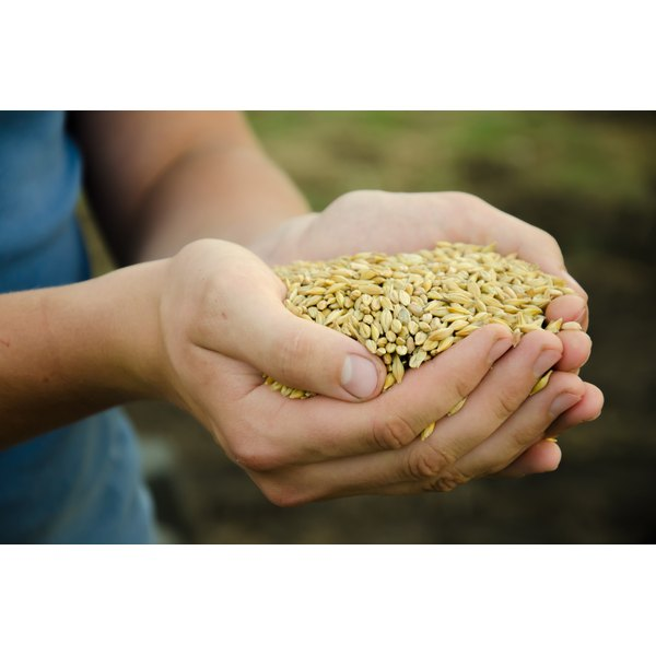 A woman is holding a handful of grains.
