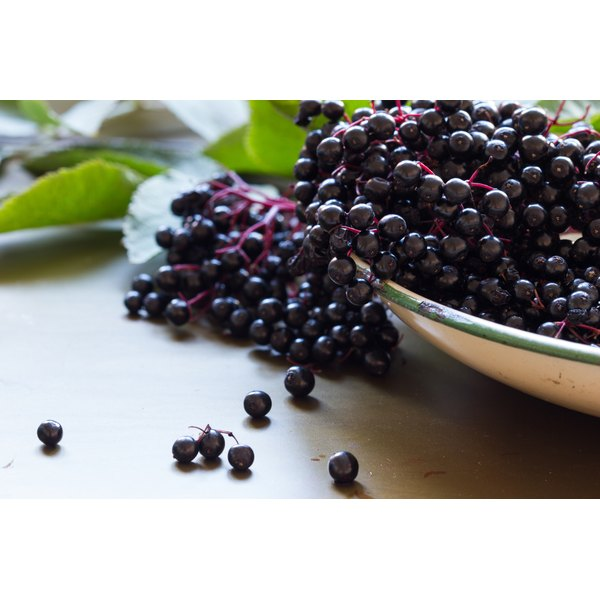 A bowl of black elderberries.