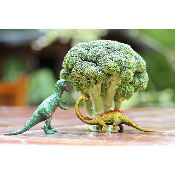Two toy dinosaurs and a head of broccoli on a table.