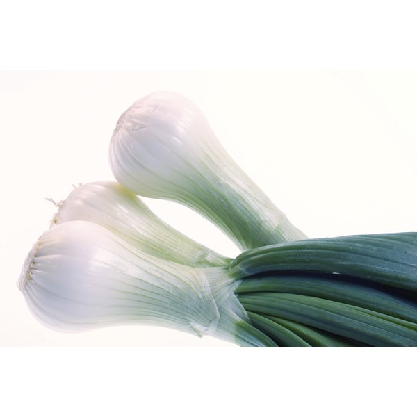 Unlike licorice, fennel is an herb that looks akin to the vegetable bok choy.