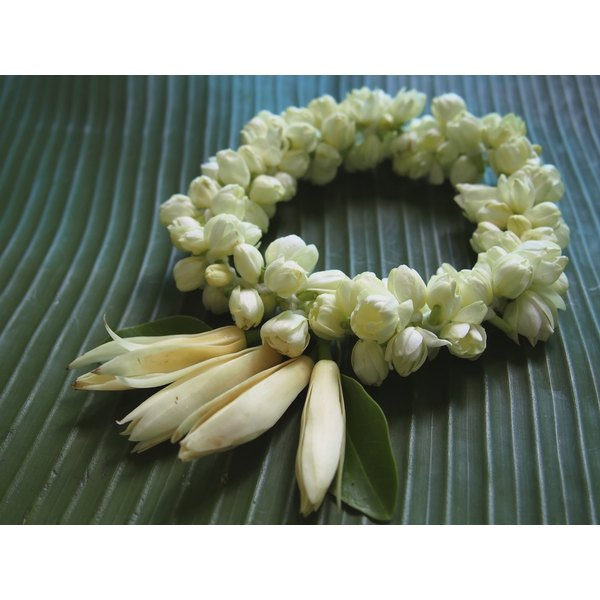 What Is The Meaning Of The Jasmine Flower Synonym