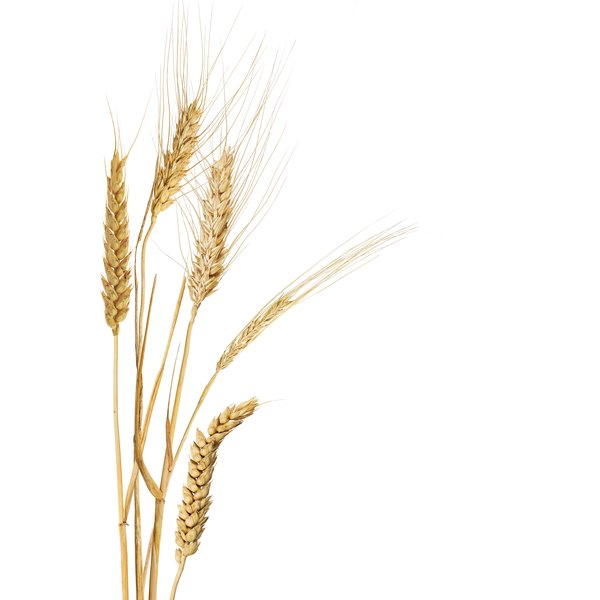 Cutting wheat from the diet may cause side effects.