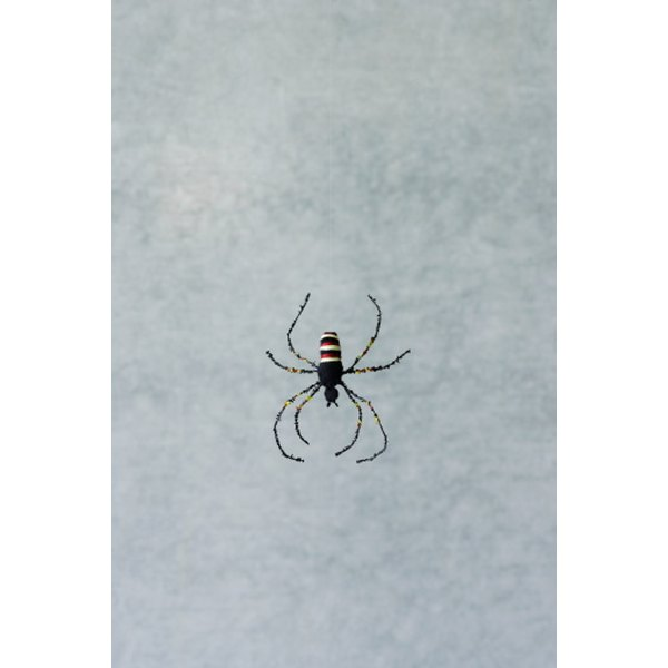 Get rid of household pests with Cypermethrin.