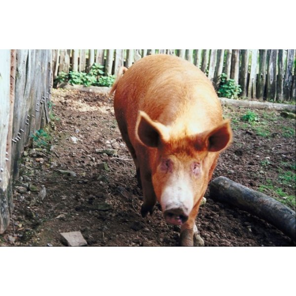 Pork jowls are used for seasoning various dishes.
