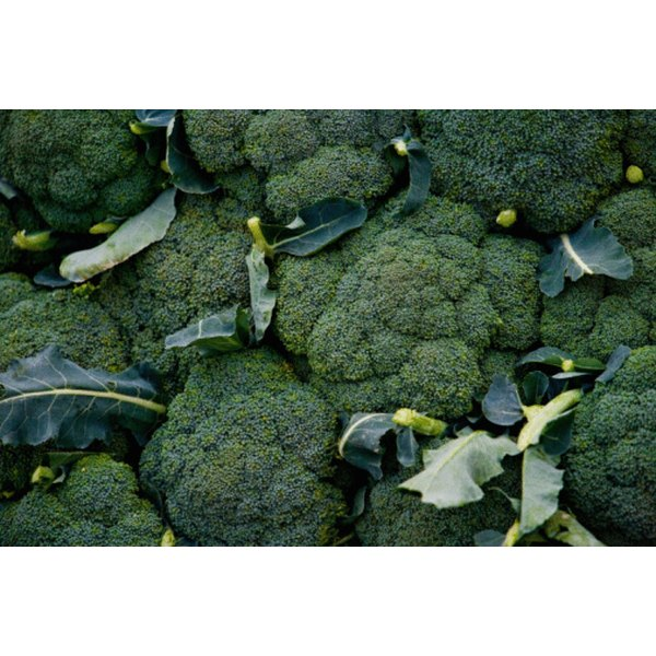 Most cruciferous vegetable such as broccoli, turnip greens and cabbage have a high roughage content.