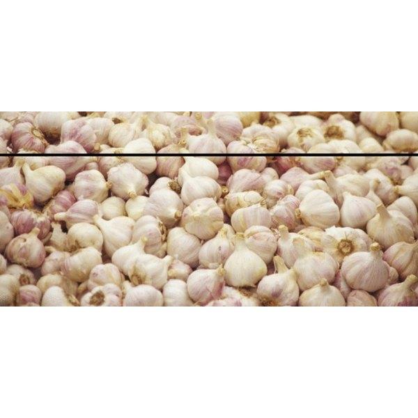 Produce bundles of fresh garlic with the help of a homemade garden planter.
