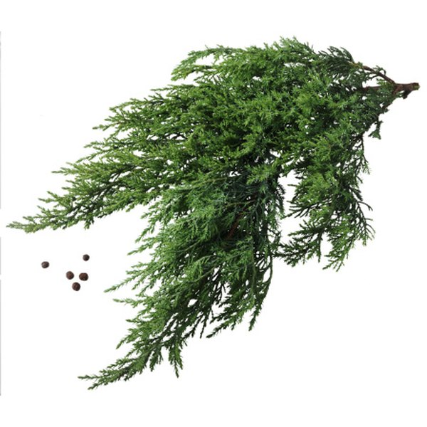 Junipers produce berries, but they may cause gastrointestinal problems.