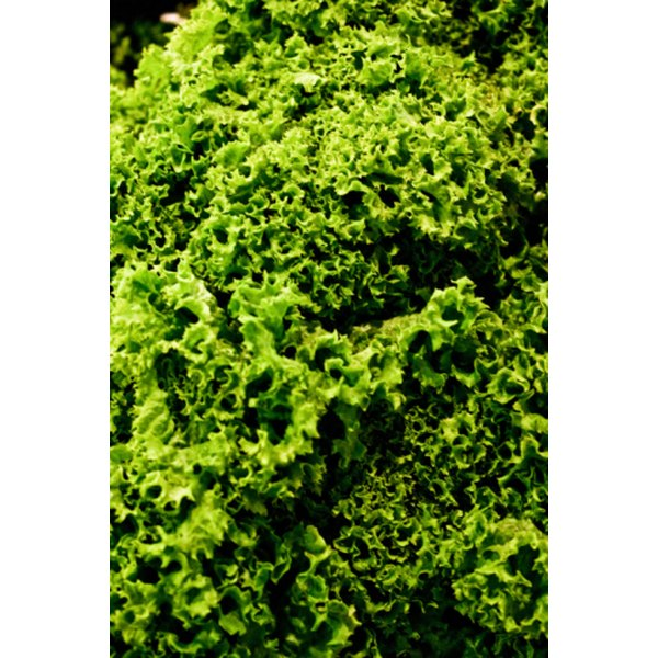 Kale is rich in vitamin K, which can interfere with warfarin.
