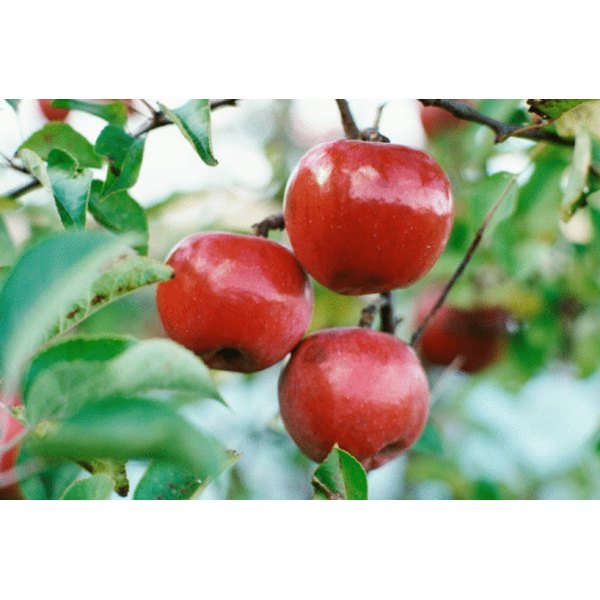 Sweet apples have an alkalizing effect on stomach acids.