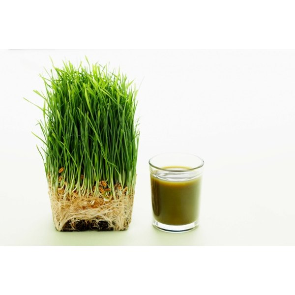Reap the many benefits of barley grass by drinking or taking it in pill form.