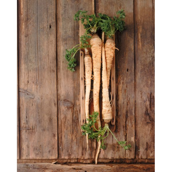 Parsnips resemble carrots in most ways aside from their color.