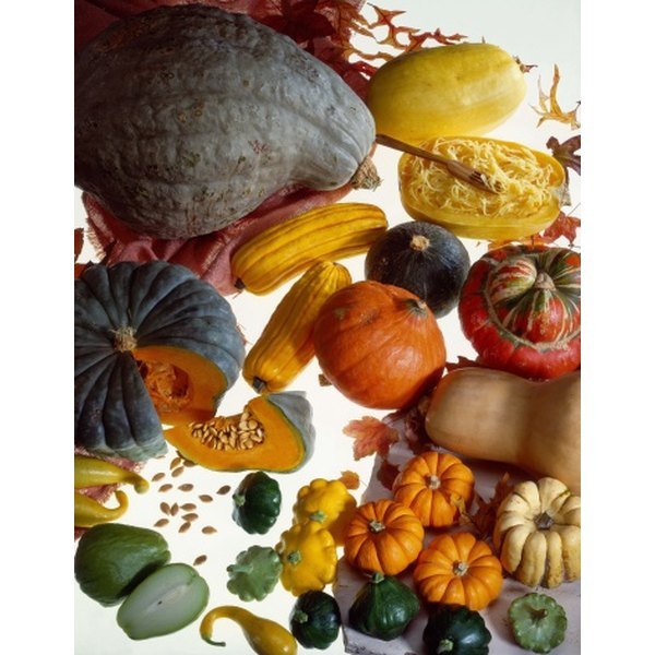 Winter squash have a longer shelf life than summer squash.