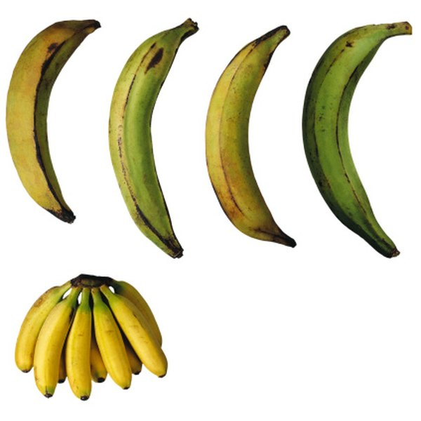 When ripe and yellowish-black, plantains are just as sweet as bananas.