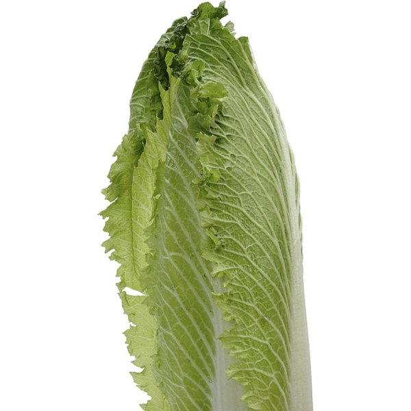 Grilled romain lettuce is healthy and flavorful.