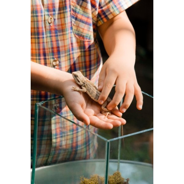Boy playing with pet lizard.