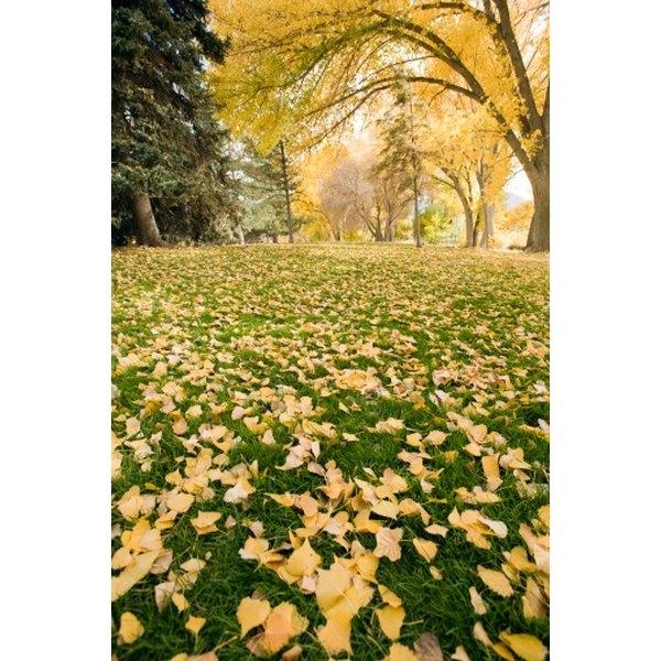 Utah's fall foliage can provide a beautiful wedding backdrop.