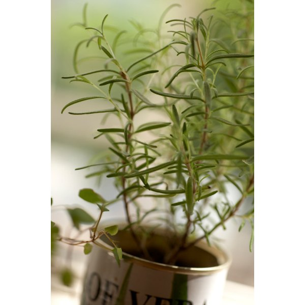 Rosemary adds flavor to vinegar.