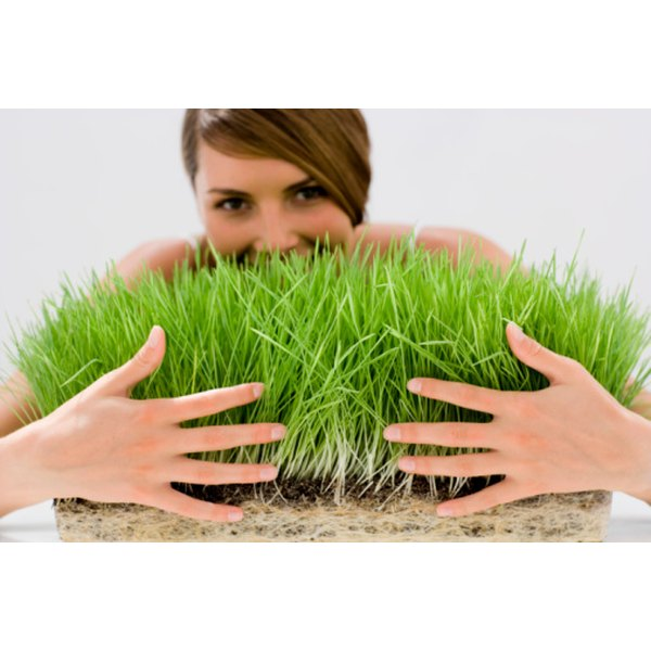 Wheatgrass leads to taut, firm skin, the Hippocrates Institute reports.