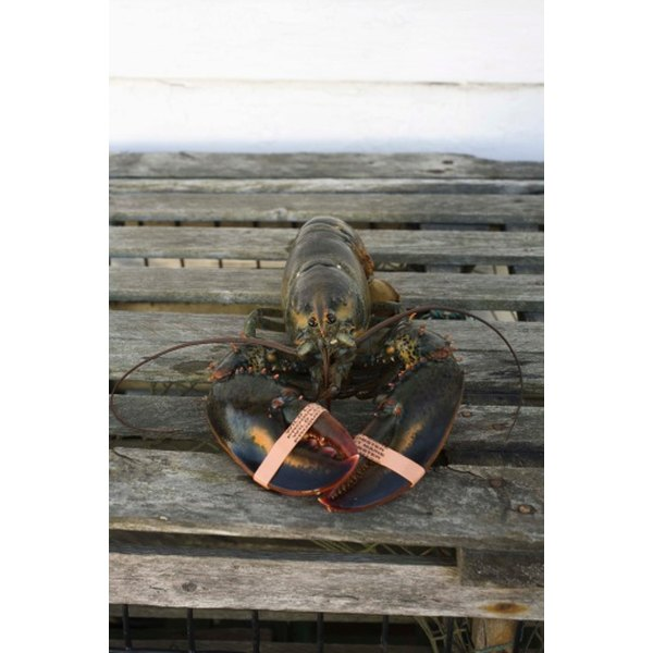 Live lobster is not inherently pink or red.