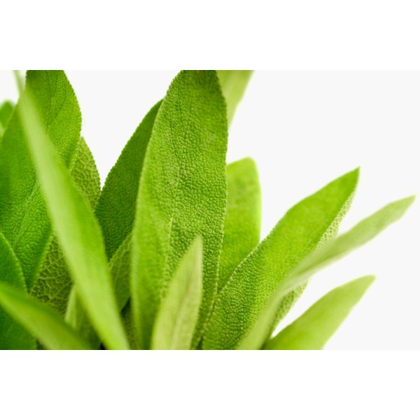 Dry sage leaves for use in your cooked dishes.