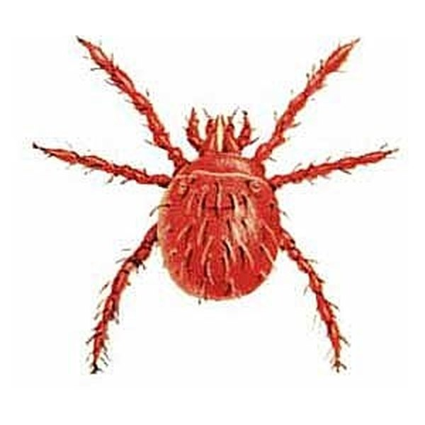 Getting bit by one of these will cause some serious itching