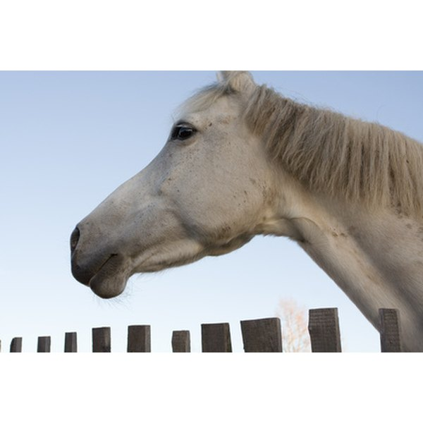 Swollen lymph nodes in horses our everyday life swollen lymph nodes may be a sign of strangles an equine disease ccuart Choice Image