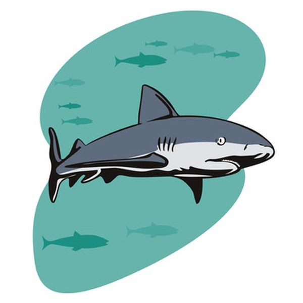Plan a shark-themed party for your child's next birthday.