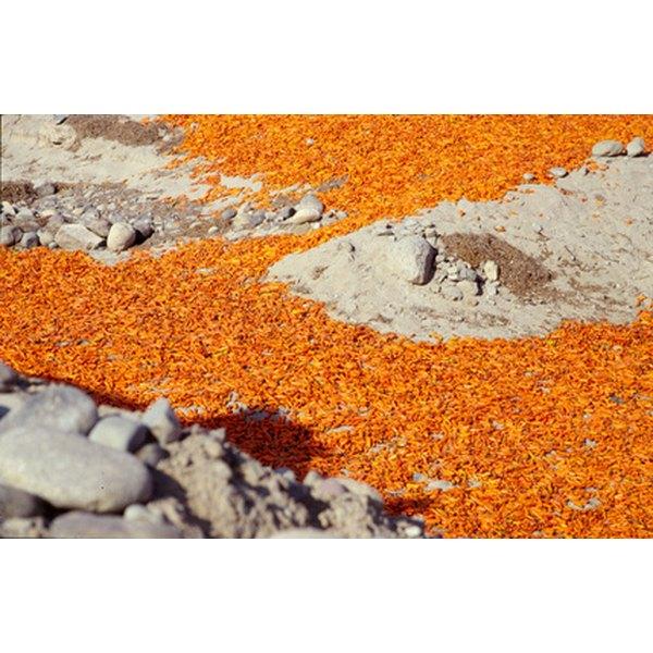 Orange aji peppers are common in Peruvian cuisine.