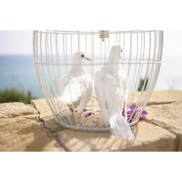 Releasing doves is a beautiful way to end a wedding ceremony.