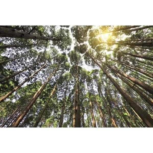 Spiritual Meaning Of The Cedar Tree Synonym