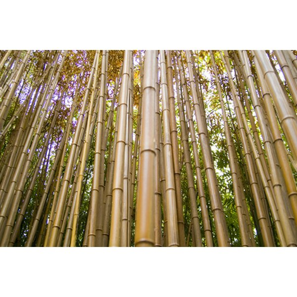 Bamboo is a hard-working plant.