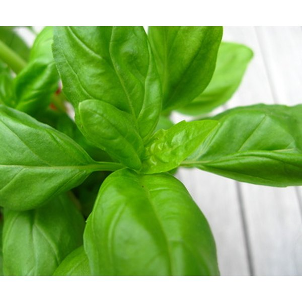 Fresh basil leaves can help to clear up a rash on the face.