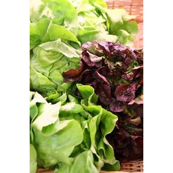 Darker colored lettuce provides more nutrients.