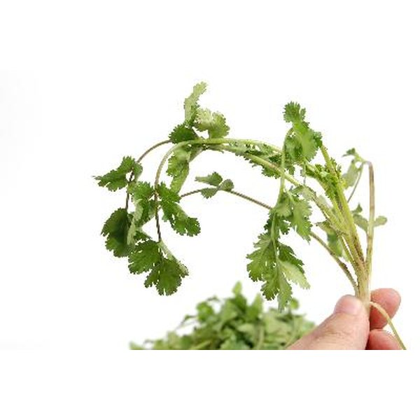 The vitamin K in cilantro helps your blood coagulate correctly.