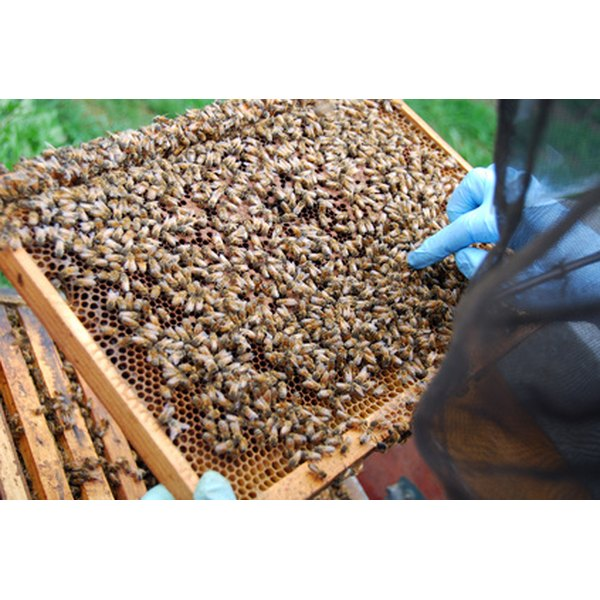Hives are nature's own propolis and royal jelly factories.