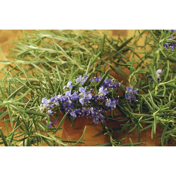 Rosemary is a natural herb for focus.