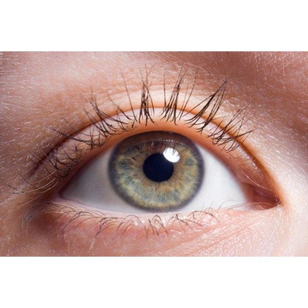 The amazing eye.