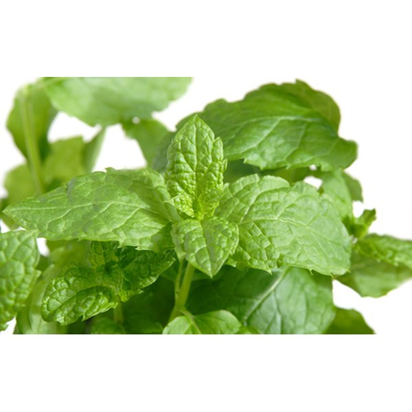 Drinking spearmint tea may help to treat hirsutism.