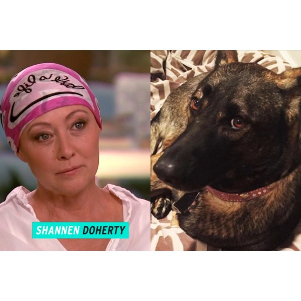 Shannen Doherty tells ET about how her dog Bowie detected her cancer.