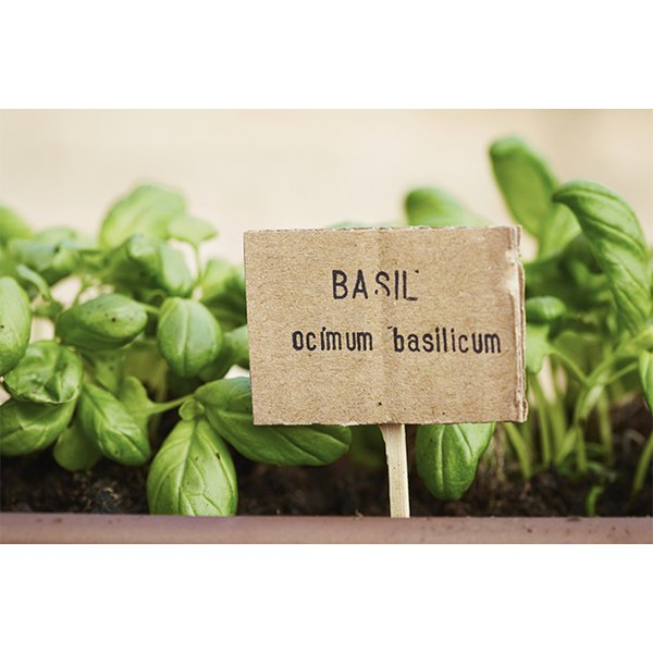 Fresh herbs engage your senses of sight and smell, as well as taste.