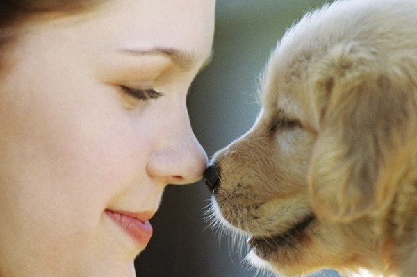 Consistency and positive reinforcement equal successful socialization.