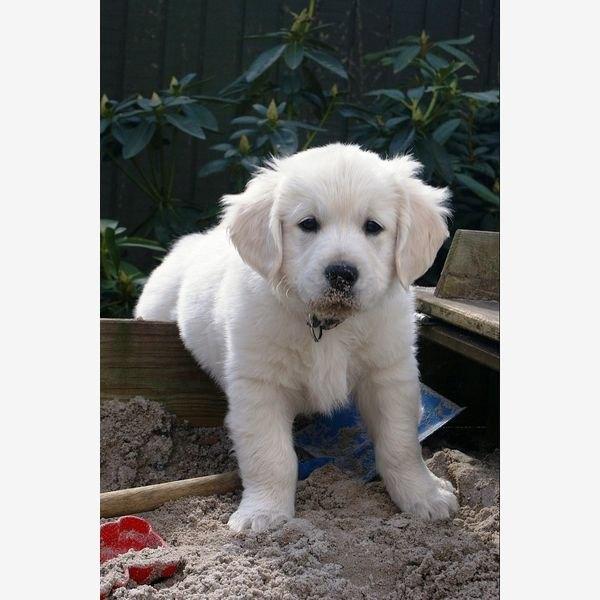 Ludwig es un cachorro inteligente y obediente.