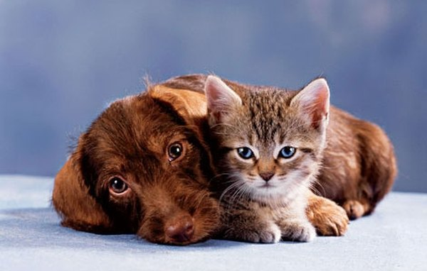 How To Keep A Pet Flea Free Naturally Animals Mom Me