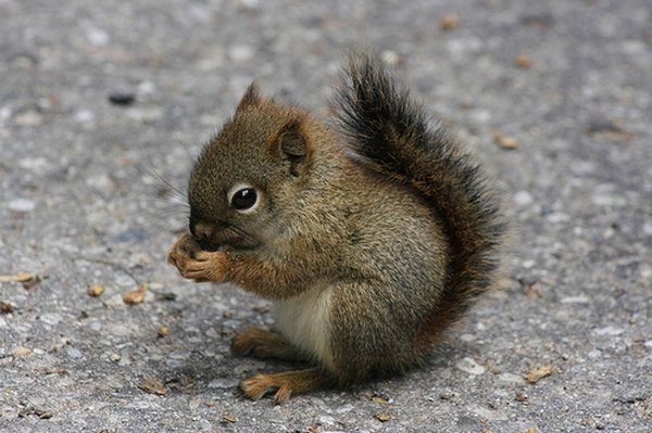 How to Talk to Squirrels   Animals - mom me