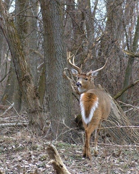 Building Deer Blind With PVC