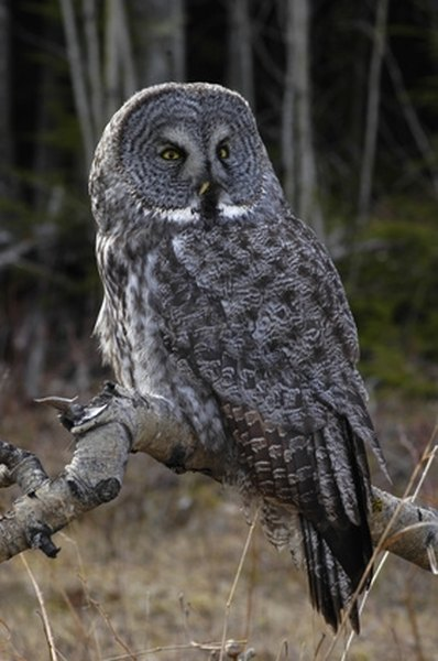 How to Build an Owl Trap