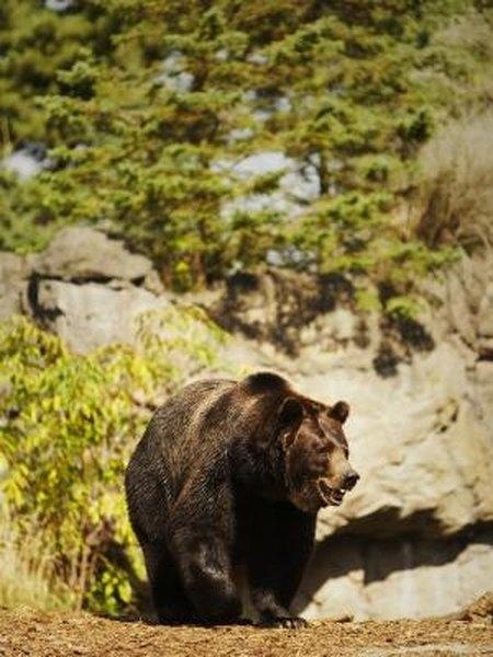 Homemade Bear Repellent