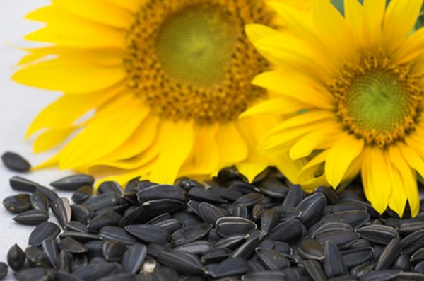 Sunflowers are a fast-growing and beautiful choice
